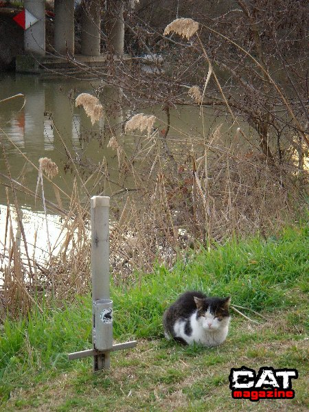 Cat...fishing