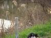 Cat...fishing