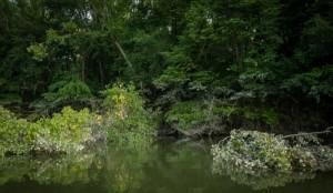 La foresta immersa