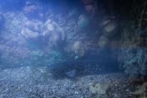 Silurato nell'Aquario presso lo stand MGSI